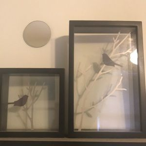 Bird shadow boxes
